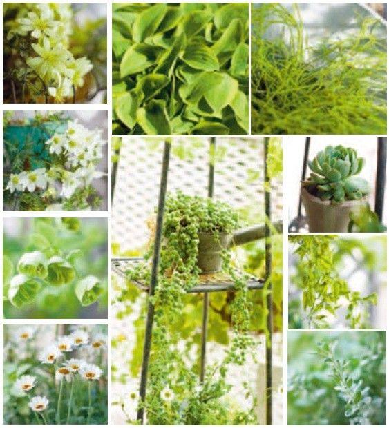 陽台植物,更美更好顧的8個小技巧