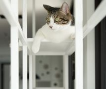 Cat's Amusement Park - 現代風 - 21-35坪